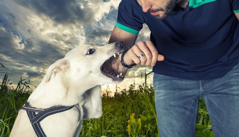 Qué hacer si te muerde un perro